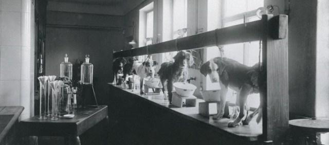 El laboratorio de I. Pavlov.