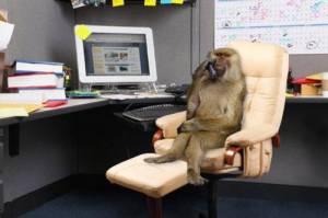 Dr. Papadopuros Wstky, trabajando en su oficina. Ubicación desconocida.